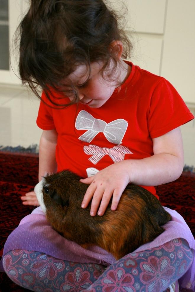 Guinea Pig Cuddles